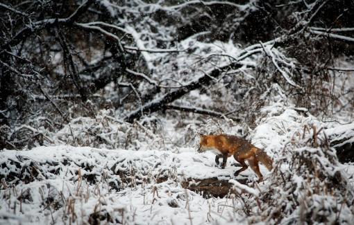Un défi pour nos étudiants en Technologie de l'informatique : le tracking des animaux sauvages